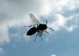 eliminar insectos del jardin